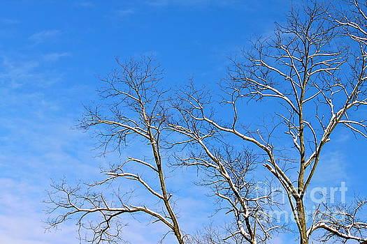 Winter Blue Sky by Jay Nodianos