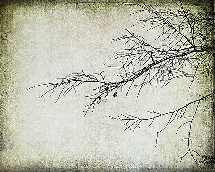 Winter Branch by Suzanne Barber
