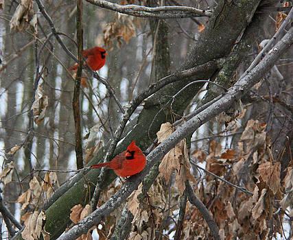Winter Cardinals by Karl Gebhardt