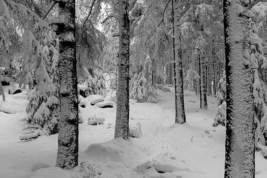 Winter fairy tale forest by Andreas Levi