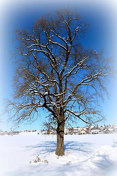 Winter Oak by The Creative Minds Art and Photography