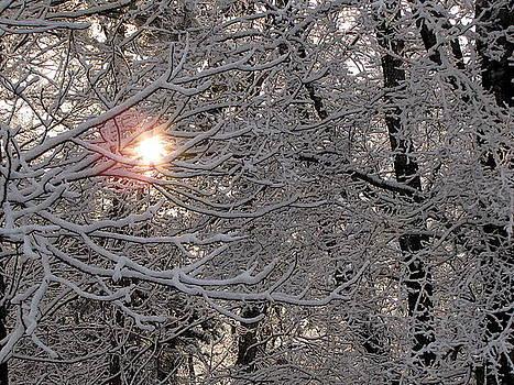 Winter Sunrise by Greg Simmons