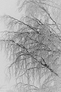Winter Willow by Dave Weth