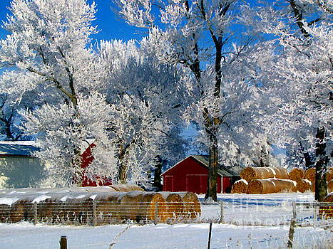 Winter Wonderland by Laurie Wilcox
