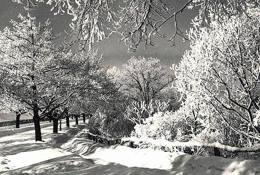 Winter Wonderland by Pat Mchale