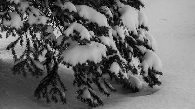 Winter's Embrace by Shon Saylor