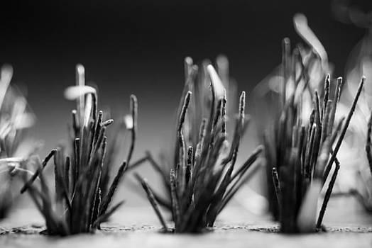 Wire Brush by Steve Johnson