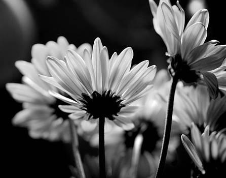 X-Ray Flowers by Jennifer Lamanca Kaufman