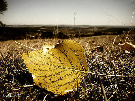 Yellow Leaf by Cora Brum
