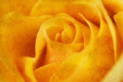 Yellow Rose by Joan Bertucci