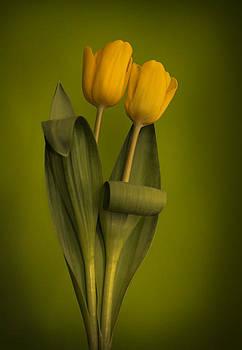 Yellow Tulips on a Green Background by Eva Kondzialkiewicz