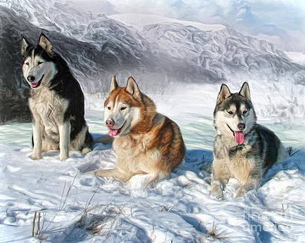 Alaskan Malamute by Trudi Simmonds