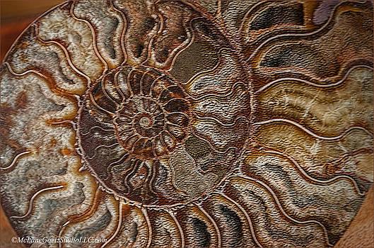 LeeAnn McLaneGoetz McLaneGoetzStudioLLCcom -  Ammonite Fossils