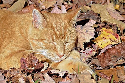 Autumn Dreaming by Susan Leggett
