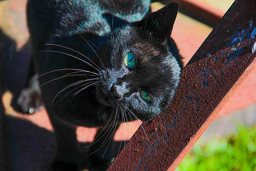 Black Cat Scratch by Graham Hayward