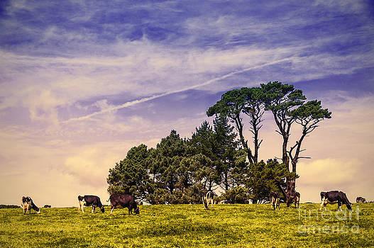 Svetlana Sewell -  Countryside