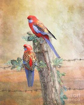 Crimson Rosella by Trudi Simmonds