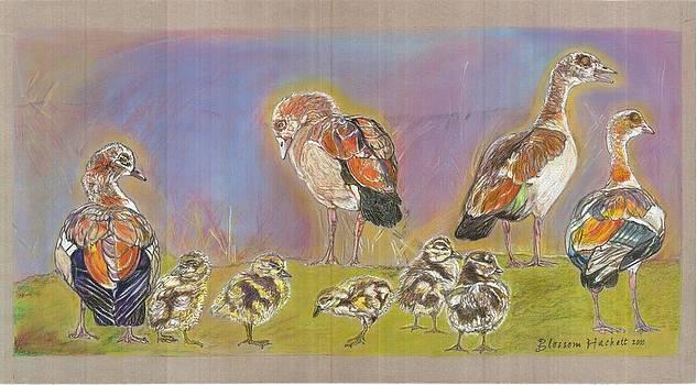 Egyptian Goose n gosling by Blossom Hackett