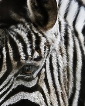 Eye C Stripes by Katie Abrams