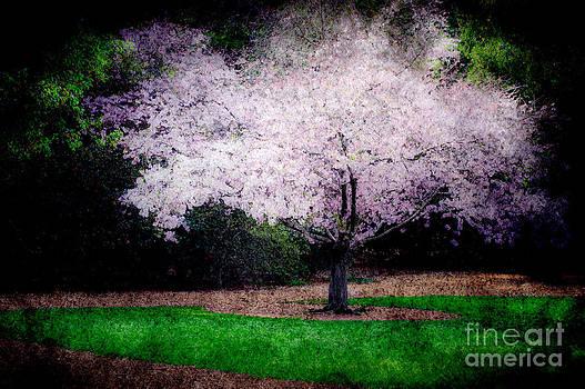 Ghostly Spring by Bobbi Feasel