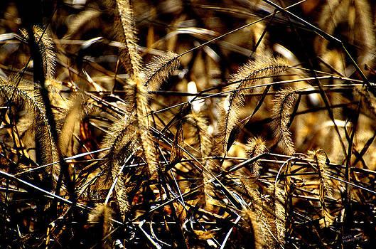 Golden Weeds  by Karen Kersey