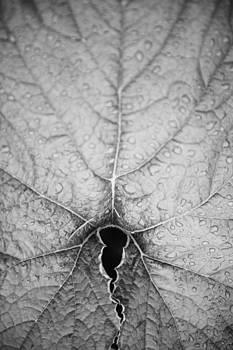 Nature still life by Lars Hallstrom