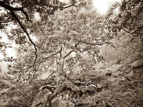 Oak tree in the morning mist  - Duotone by Martin Liebermann