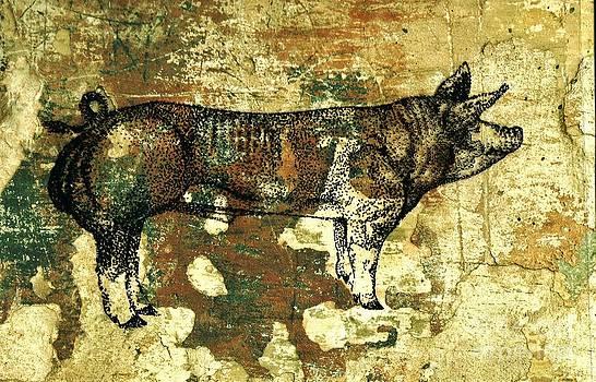 German Pietrain Boar 27 by Larry Campbell