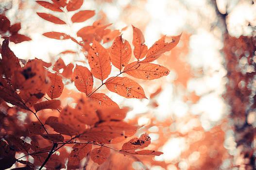 Jenny Rainbow -  Rusty Leaves