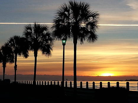 Sunrise Beyond Carolina  Palms by Joetta Beauford
