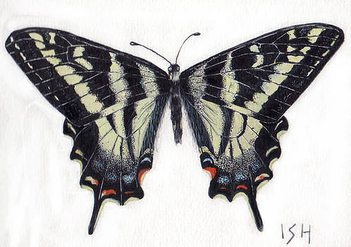Swallowtail Butterfly  by Inger Hutton