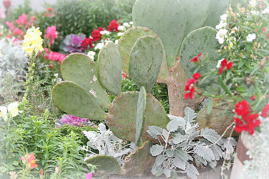 Kathy Peltomaa Lewis -  Texas Cactus Garden