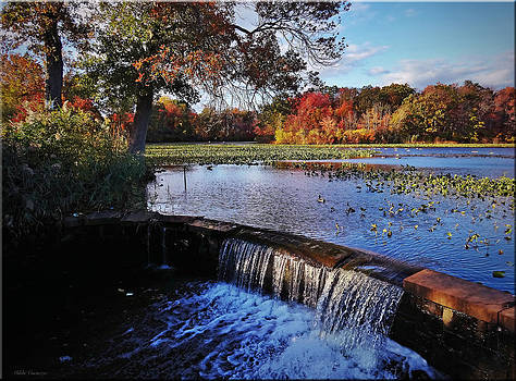 Waterfall at Park by Mikki Cucuzzo