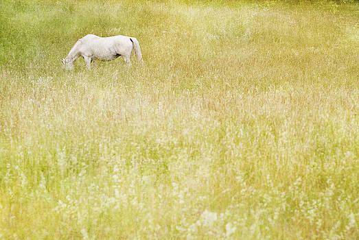 White horse by Lars Hallstrom