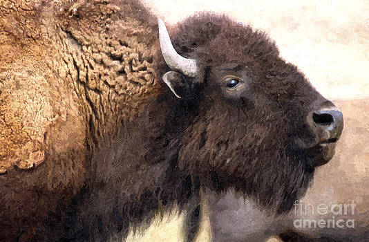 Bison by Larry Stolle