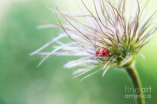 LHJB Photography - a ladybug