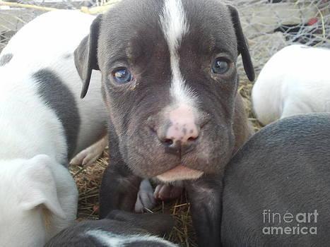 A Little Puppy Dog by Greg Davis