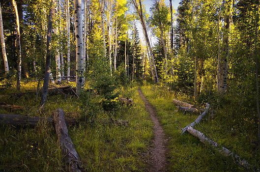 Saija  Lehtonen - A Path Through the Woods