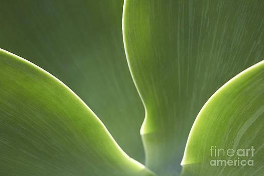 Abstract Flower by Tony Cordoza