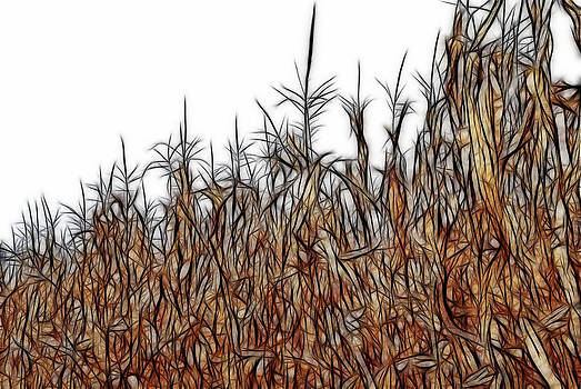 Cindy Boyd - Abstract of a Cornfield