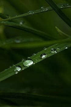 Karol  Livote - After The Rain