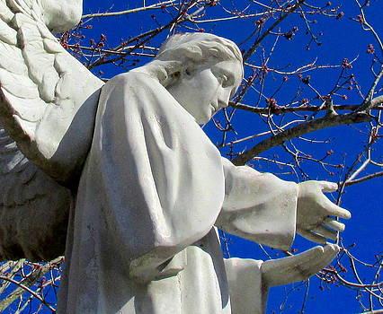 Angel  by Dana Doyle