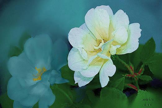 Apple Blossom by Bonnie Willis