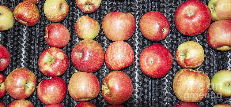 Steven Ralser - Apples
