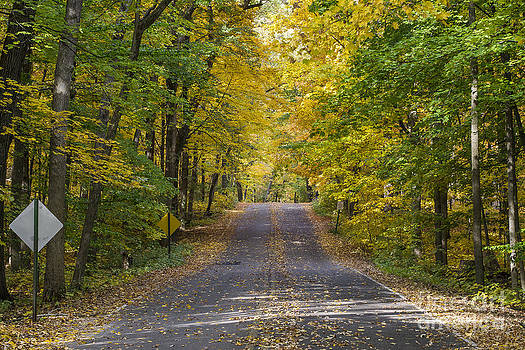 Steven Ralser - Arboretum fall
