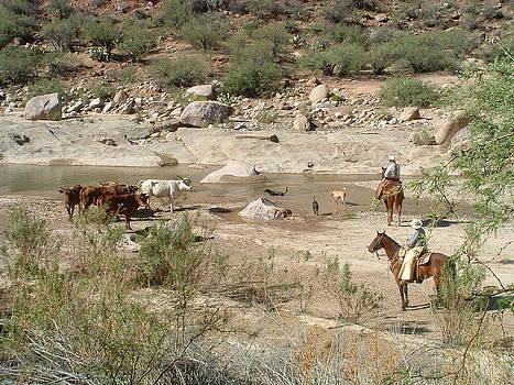 Arizona Working Ranch by Steffi Pilz