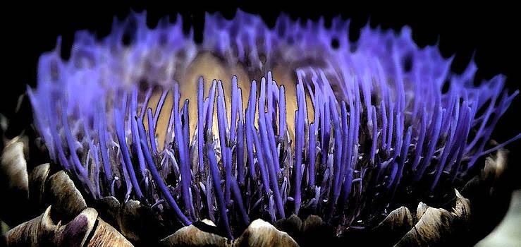 Artichoke Flower by Anne Mott