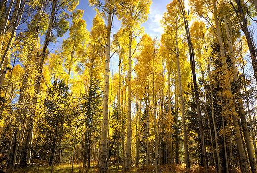 Saija  Lehtonen - Golden Autumn