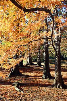 Carolyn Stagger Cokley - Autumn Leaves0884