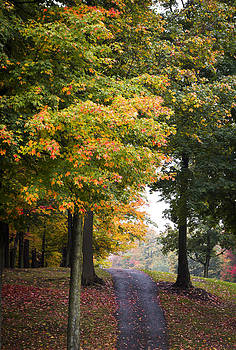 Autumn Path by M Cohen